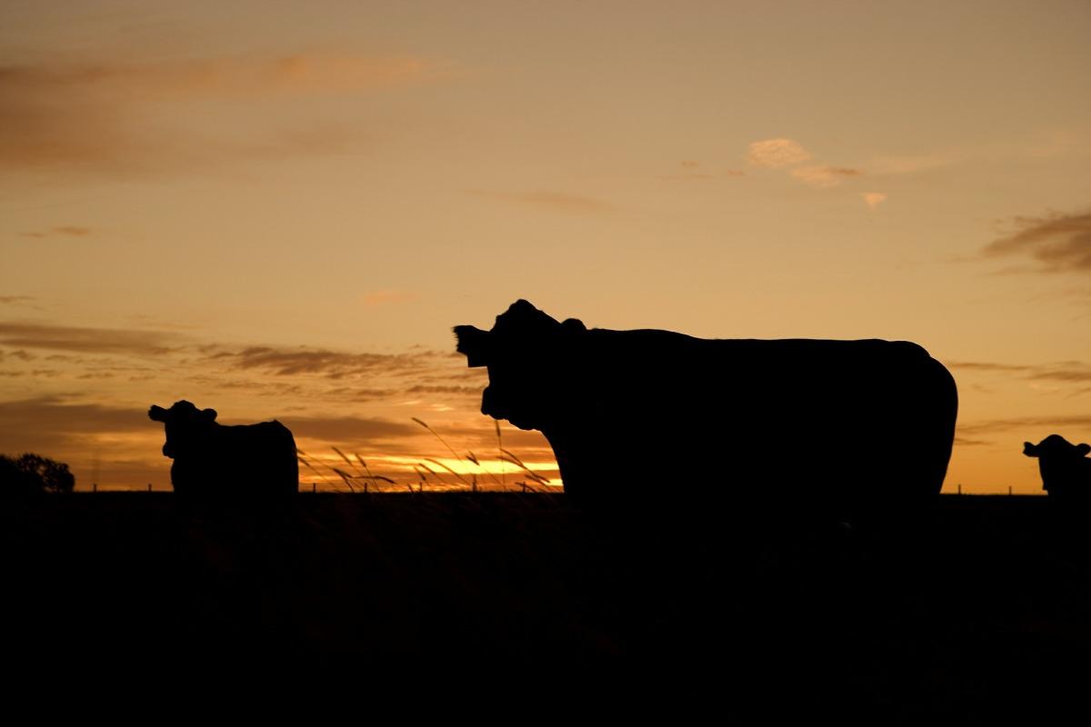 Cows Under aTree
